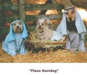 fleas_navidog2